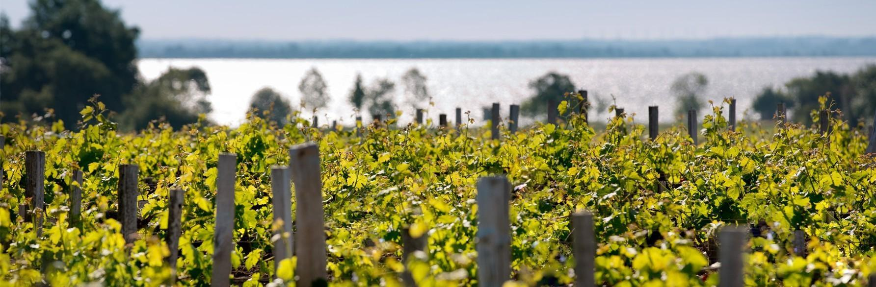 Vignoble Bordelais : histoire, appellations, spécificités...